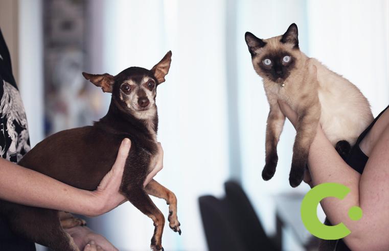 Zoonoses de Louveira disponibiliza gatos e cachorros para adoção