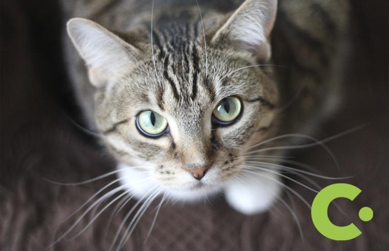 Bem-Estar Animal de Vinhedo realiza castração de felinos em parceria com iniciativa privada
