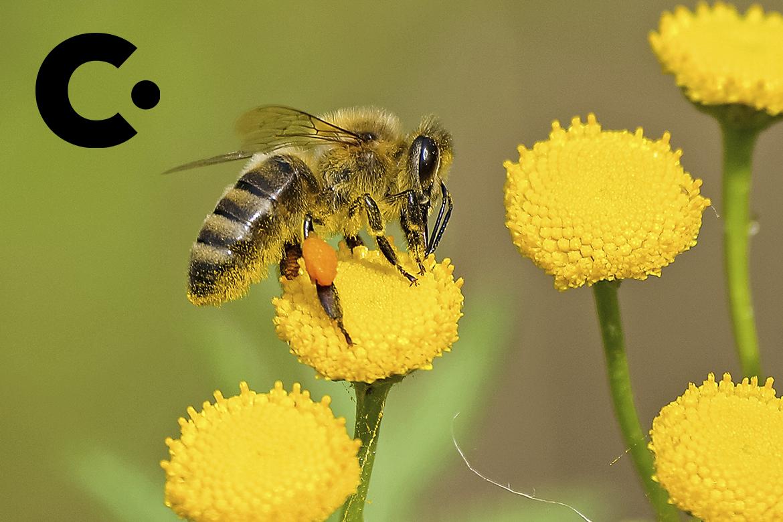 Meio Ambiente de Vinhedo participa de resgate de abelhas silvestres